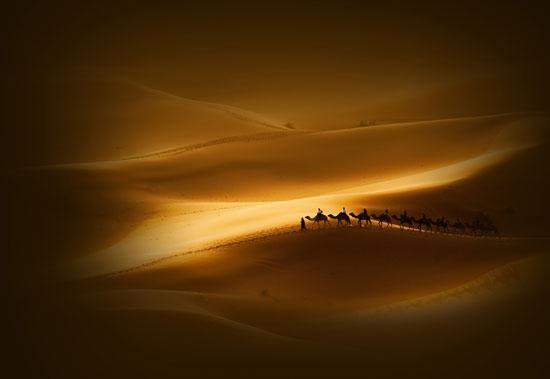 了无生机的沙漠、荒原中,也依然有生命顽强地生存