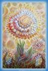 你的心智是一个空间,你在这个空间不断种植什么?