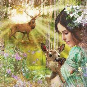 心灵抚慰音乐分享:Kitaro--Healing Forest