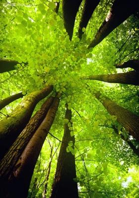【自然音乐】看树六分钟,即可显著减压